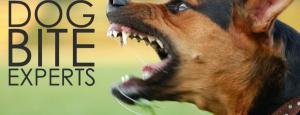 dog bite attorney Riverside CA Attorneys Directory